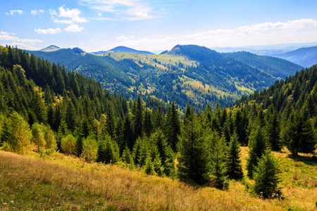Sunny morning in the Carpathian mountains