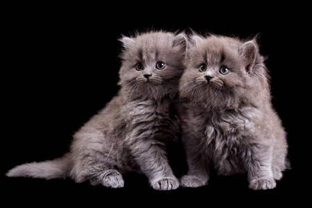 fluffy: Fluffy kittens isolated on black background