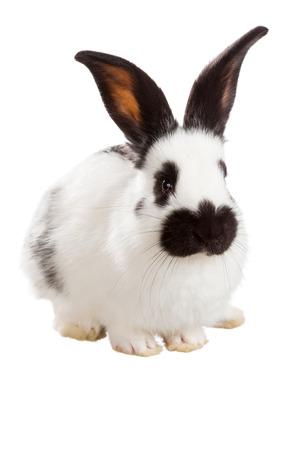 conejo: Conejo blanco esponjoso aislado en fondo blanco Foto de archivo