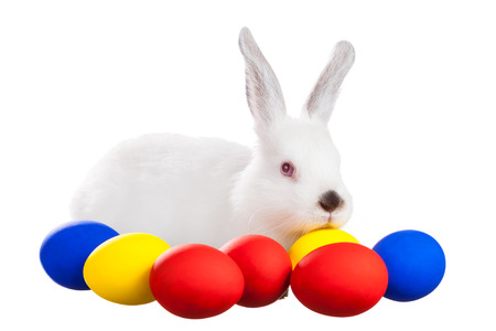 White rabbit with Easter eggs on white background Stock Photo