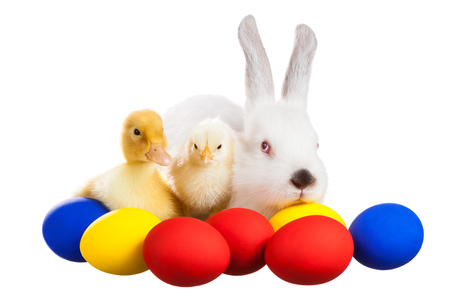 Bunny chick and duckling sitting with Easter eggs
