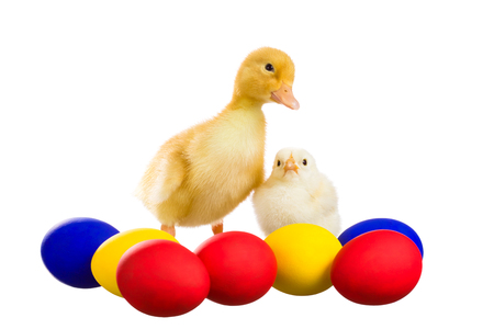 Yellow chick and the duckling stand near Easter eggs