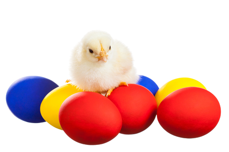 Chick sitting on coloured eggs isolated on white background