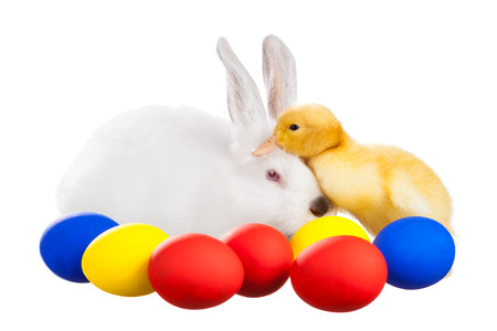 The white rabbit and the duck with colored eggs on white background