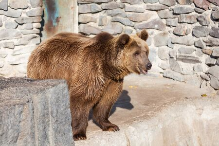 Bear in the zoo on a background of stones