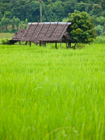 A hut in ricefield,Pai Thailand Stock Photo - 13859939