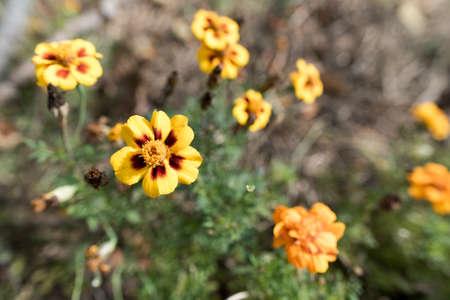 Yellow Flowers near the Blue Ridge Parkway in Virginia. Reklamní fotografie - 89603696