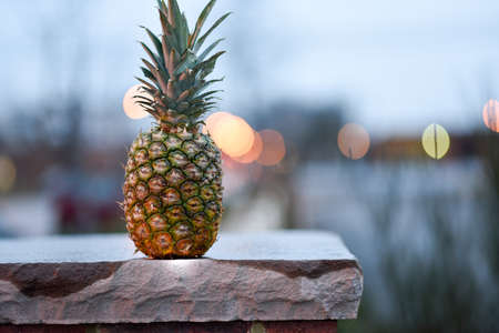 Random pineapple sitting on a post at the corner of my street Reklamní fotografie