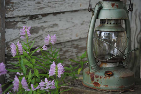 Purple flowers besides a rustic lantern on a bench.