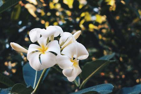 industry: Flower in bokeh