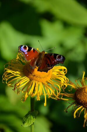 A Butterfly on flower