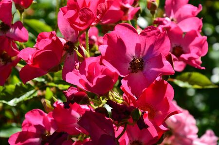 A beautiful flower in the garden Stockfoto