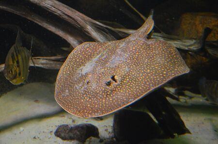 Tropical fish in aquarium, Berlin