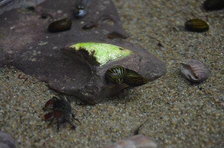 The marine life in the aquarium of Berlin Germany Фото со стока