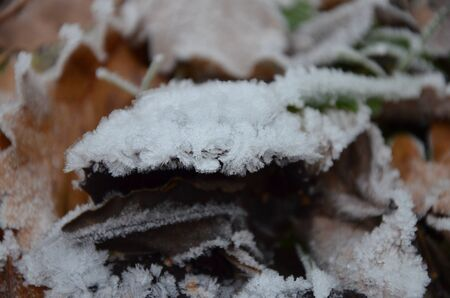 background of autumn leaves in the frost Standard-Bild - 140647381