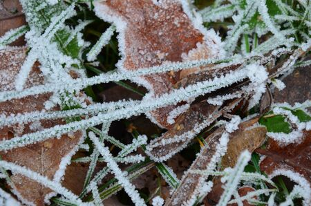 background of autumn leaves in the frost Standard-Bild - 140647467