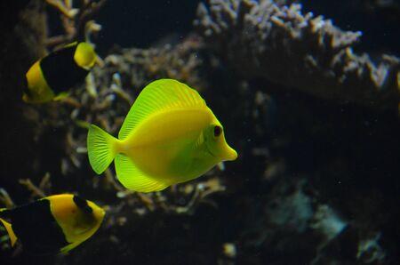 Tropical fish in aquarium, Frankfurt am Main (Germany)