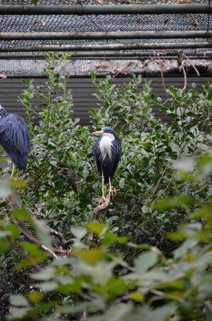 gray heron sitting on top, Frankfurt zoo Banque d'images