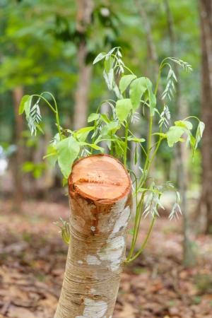 cutoff: cutoff the tree inside forest
