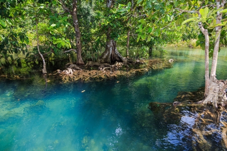 river and swamp forest or peat swamp forest