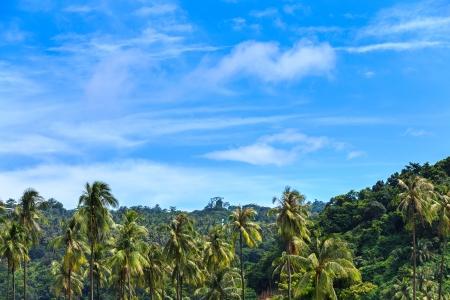 view point kho phi phi island at krabi thailand photo
