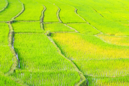highlands region: agriculture farm rice
