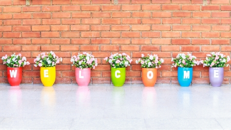 welcome vase flower color  photo