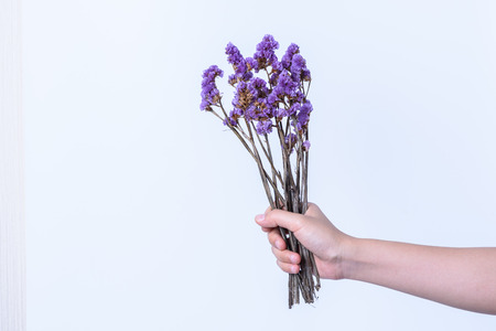 Hand holding purple flower on white background stock photo picture hand holding purple flower on white background stock photo 71991347 mightylinksfo