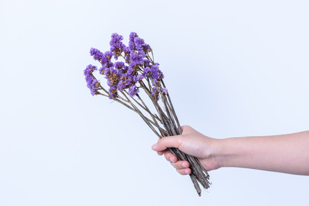 hand holding  purple flower on white background