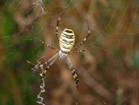Spider is on his web, hunter 写真素材