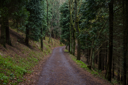 Mistyc Road in the forest.