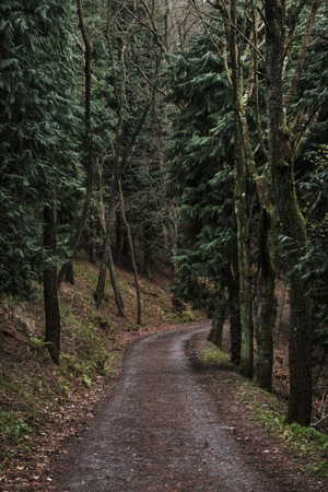 Road in the forest. Stock Photo