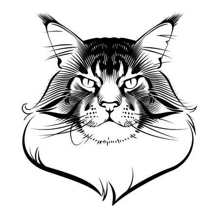 Maine Coon Cat ink graphic rendered in vector, tattoo design Illustration