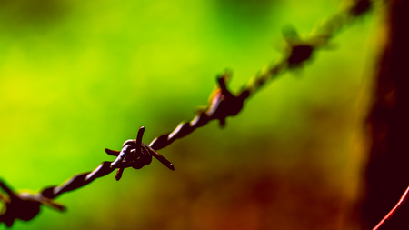 Barbed Wire Prison Crime Freedom Concept