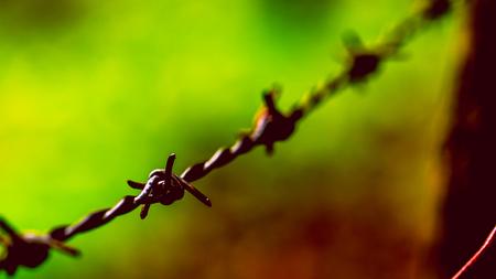 wire fence: Barbed Wire Prison Crime Freedom Concept