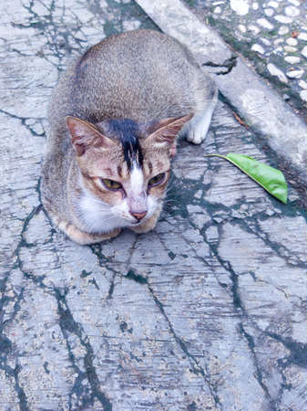 A hungry street cat is asking to be fed for him and he is waiting and patient