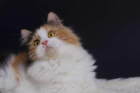 yellow, black, white colored cute cat