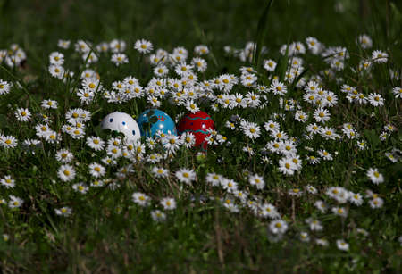 Colorful easter eggs among daisies