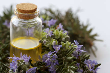 Rosemary plant on white ground and rosemary oil in bottle
