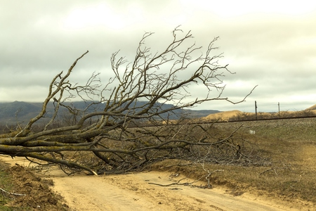 dagestan: Fallen tree on the road, blocking the way for cars. Dagestan and the Caucasus. Russia. Not far from the Dune Preserve Sarykum Stock Photo