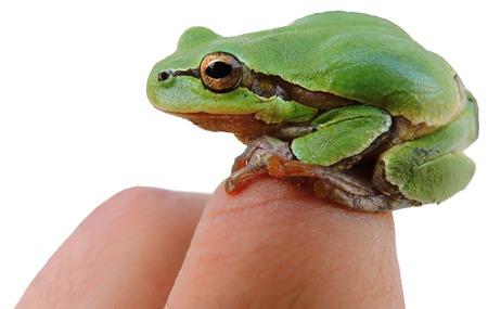 Frog (rana), seduta sul suo braccio. Isolato