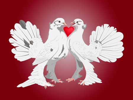 of them: Pair of lovers thoroughbred white doves with a heart between them on a red background