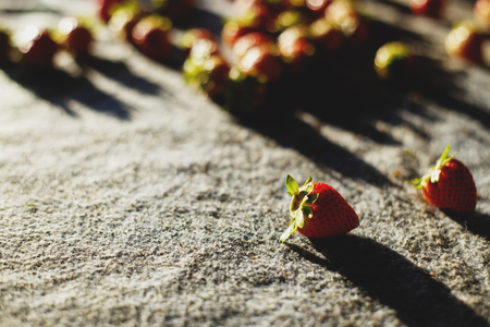 Ripe red strawberries on fabric in the morning, selective focus. Stock Photo