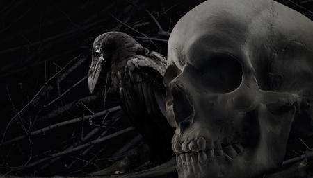 Foto de un cuervo negro blanco y negro que se sienta con cierre humano del cráneo encima de la composición con el modelo del fondo de la rama. Foto de archivo - 84333524