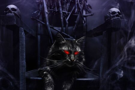 Close-up photo of evil cat with glowing eyes on witch throne made of branches and skulls on foggy black background.