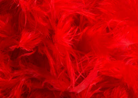 Background photo of red colored feathers texture.