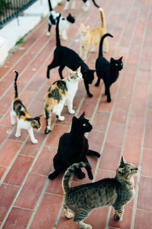 a flock of stray cats on the street Imagens