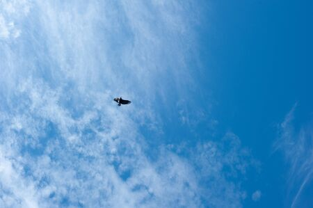 American bald eagle circling in the air Stok Fotoğraf