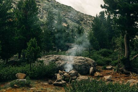 extinguished fire in the coniferous forest Stok Fotoğraf