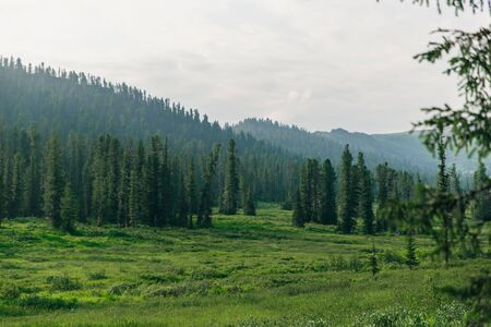 Summer alpine plateau with pastures, valleys and forests.